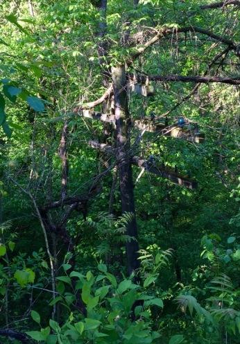 Telephone pole overgrown